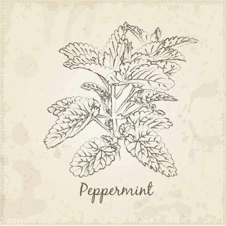 Kitchen hand-drawn herbs and spices .Health and Nature Collection. Labels for Essential Oils and Natural Supplements. Peppermint. Banco de Imagens - 42584285