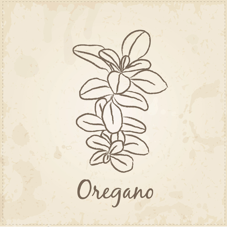 oregano: Kitchen hand-drawn herbs and spices .Health and Nature Collection. Labels for Essential Oils and Natural Supplements. Oregano. Illustration