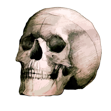 scull: Vector Hand Drawing Scull