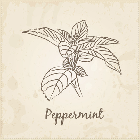 peppermint: Kitchen hand-drawn herbs and spices .Health and Nature Collection. Labels for Essential Oils and Natural Supplements. Peppermint.