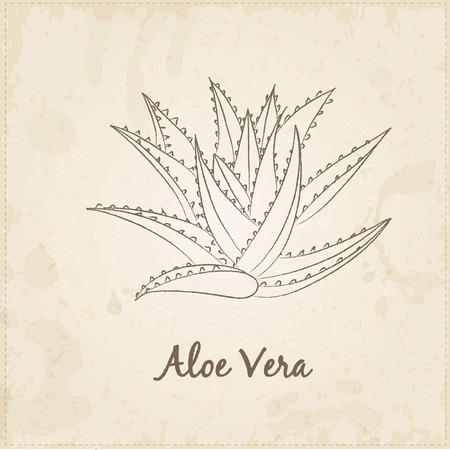 chive: Kitchen hand-drawn herbs and spices .Health and Nature Collection. Labels for Essential Oils and Natural Supplements. Aloe Vera.