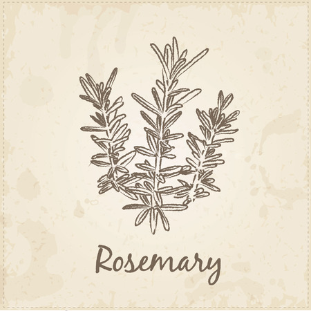 Kitchen hand-drawn herbs and spices .Health and Nature Collection. Labels for Essential Oils and Natural Supplements.  Rosemary. Illustration