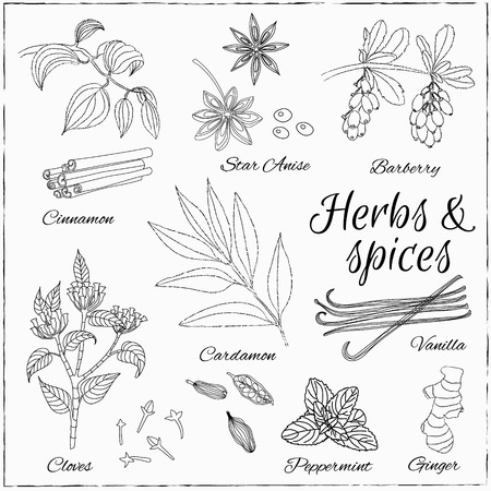 Vector hand drawn set with Dessert Spices. Vintage illustration. Retro collection with Vanilla, cinnamon, barberry, cardamom, vanilla, cloves, peppermint, star anise and ginger. Illustration