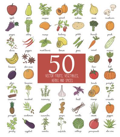 ajo: Dibujado a mano del doodle de Frutas y Verduras con nombre. Ilustraci�n vectorial