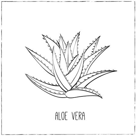 台所手描きハーブおよびスパイス。健康と自然のコレクション。エッセンシャル オイルや天然サプリメントのラベル。アロエベラ。