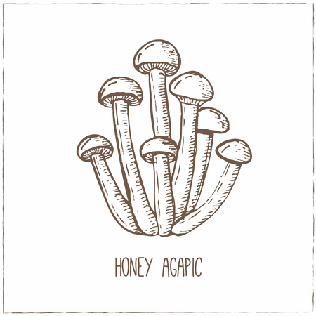 engravings: Mushrooms collection. Healthy vegetarian food. Vintage black and white illustration in the style of engravings. Hand drawn food vector background.