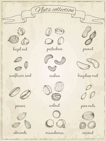 Set of nuts on a dark background. Sketches. Hand-drawing. Vector illustration of for design menus, recipes and packages product. Vector Illustration.