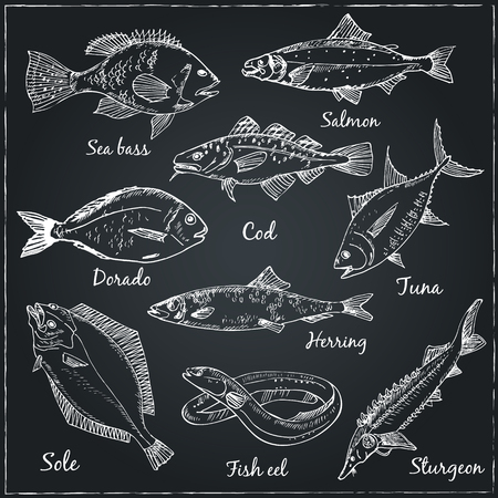 fishes: beautiful hand drawn illustration with different fishes, gilt head and sea bass.