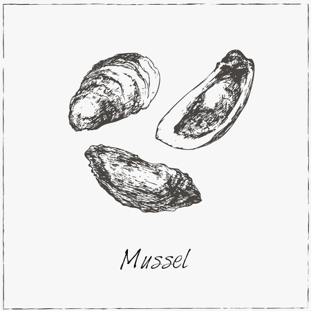 mussel: Mussel. Hand drawn sketch. Collection of seafood. Vector illustration of for design menus, recipes and packages product.