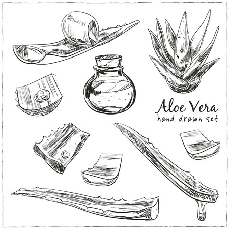 Aloe vera hand drawn set. Isolated Vector illustration. Kitchen hand-drawn herbs and spices. Health and Nature Collection.