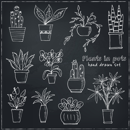 indoor bud: Set of plants in a pot Hand drawn doodle vector sketch illustration