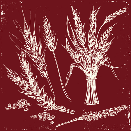 wheaten: Hand drawn Wheat ears. decorative icons set. Isolated Vector illustration in sketch style. Illustration