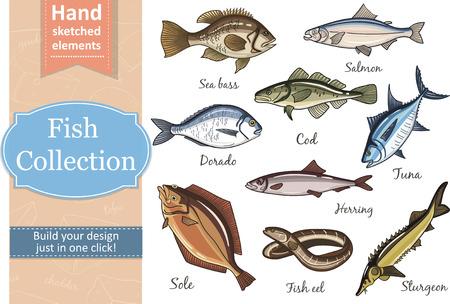 herring: Fish collection Dorado Fish Eel Tuna Salmon Halibut Herring Sea bass Cod Sturgeon. Vector illustration of fish for design menus, recipes and packages product. Illustration