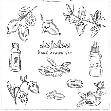 Sketch of jojoba elements. Hand drawn doodle set. Vector illustration. Isolated elements. Symbol collection.