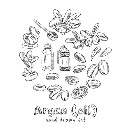 Vector set on Argan, its fruits and its application. Argan oil hand drawn doodle set. Vector illustration. Isolated elements. Symbol collection.