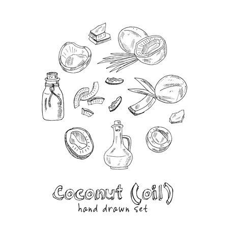 Vector coconut hand drawn sketch with palm leaf. Hand drawn doodle set. Vector illustration. Isolated elements. Symbol collection. Illustration