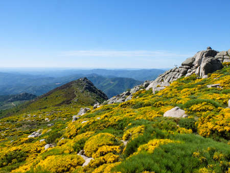 Rocks and blooming brooms in the moor with mountains in the background in the Cevennes area, near Trenze, Mont Lozere, France Banco de Imagens