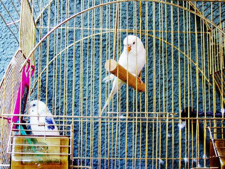 gold cage          photo