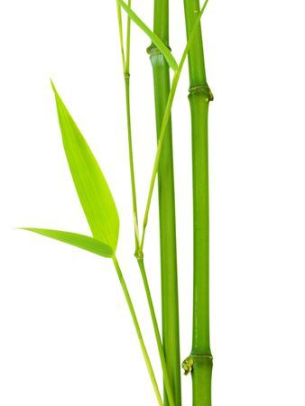 fresh bamboo stalks photo