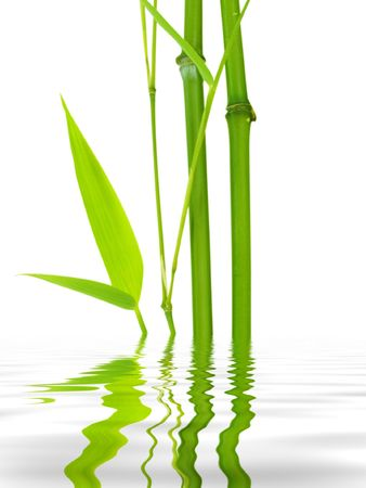 bamboo leaves: bamboo water reflection Stock Photo