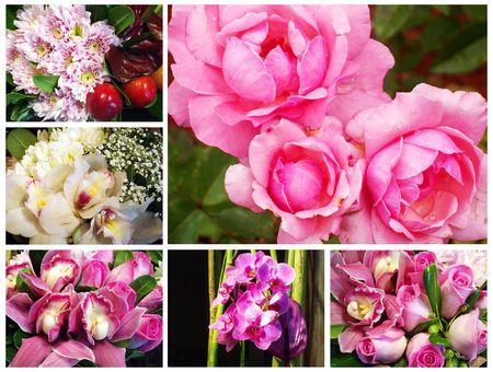 fresh pink flowers Stock Photo - 3809742