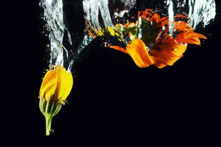 Diving flower