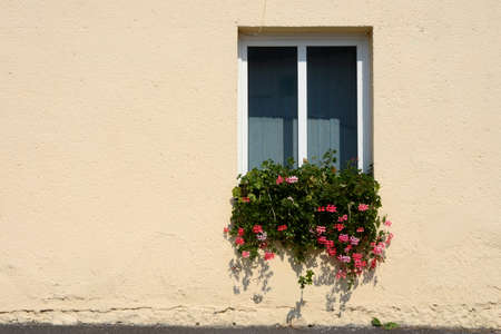 Window with flowers and an yellow wall