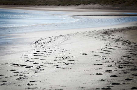 Human and dog footsteps in the beach sand Stock Photo