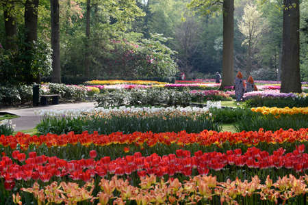 World second biggest flower garden in Keukenhof, Netherlands