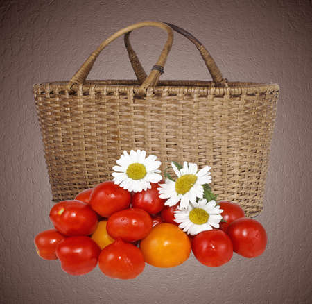 agronomic: small group of fresh tomatoes of a garden camomile Stock Photo