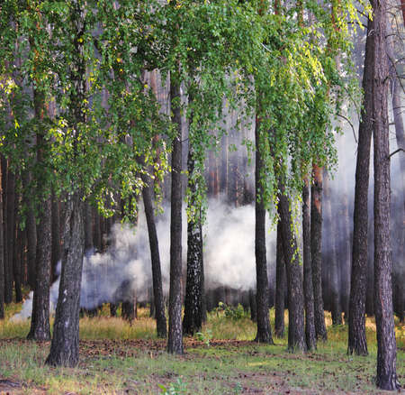 forgetfulness: a smoke from the fire thrown in wood