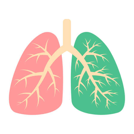 Healthy lung and diseased human lung. Respiratory system. Patient with pneumonia, asthma, lung cancer. Viruses and bacteria that cause disease. Vector illustration 向量圖像