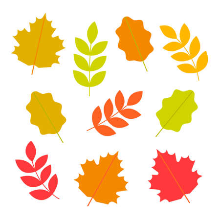 Set of autumn leaves. Fallen leaves of maple, oak, rowan. Vector illustration