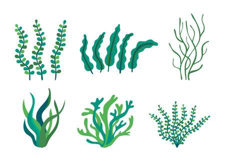 Set of different underwater sea plants and green algae for food. Edible seaweed and leaves. Plants of the aquarium. Vector illustration Vektorgrafik