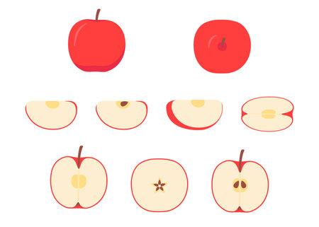 Red apple whole, cut half, piece, part and slice chopped of fruit. Harvest ripe fruit icon. Popular healthy garden food apple. Vector flat illustration Ilustração Vetorial