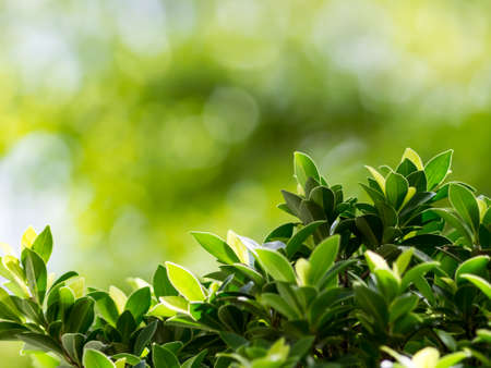 nature backgrounds: Blurred nature backgrounds, blurred backgrounds concept. Stock Photo