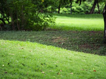 nature backgrounds: nature backgrounds, backgrounds concept. Stock Photo