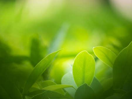 NATURE: antecedentes de la naturaleza, fondos de concepto.