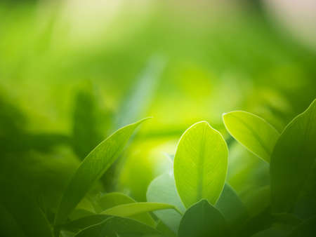 background the nature: nature backgrounds, backgrounds concept. Stock Photo