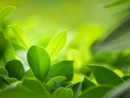 feuilles arbres: nature horizons, milieux concept.