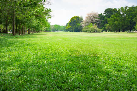 Green nature view for using as background or wallpaper. Stock Photo