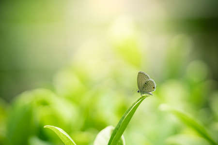 Closeup nature view of butterfly on green leaf on blurred greenery background in garden with copy space using as background natural green plants landscape, ecology, fresh wallpaper concept. Stockfoto
