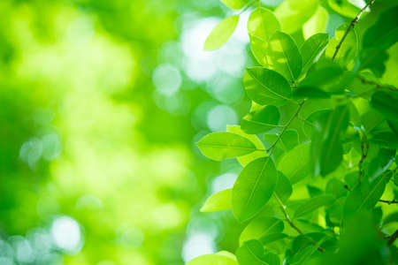 Closeup nature view of green leaf on blurred greenery background in garden with copy space using as background natural green plants landscape, ecology, fresh wallpaper concept. Stockfoto