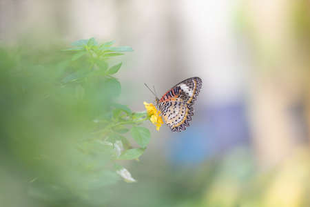 Closeup nature view of butterfly on blurred greenery background in garden with copy space using as background natural green plants landscape, ecology, fresh wallpaper concept. Stockfoto
