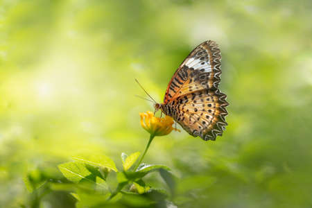 Closeup nature view of butterfly on blurred greenery background in garden with copy space using as background natural green plants landscape, ecology, fresh wallpaper concept. Stock Photo