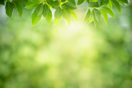 Closeup nature view of green leaf on blurred greenery background in garden with copy space using as background natural green plants landscape, ecology, fresh wallpaper concept. Stock Photo