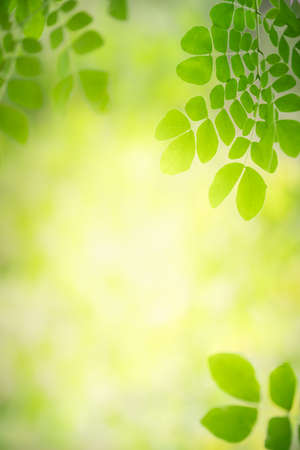 Beautiful nature view of green leaf on blurred greenery background in garden with copy space using as background natural green leaves plants landscape, ecology, fresh wallpaper concept. Stockfoto