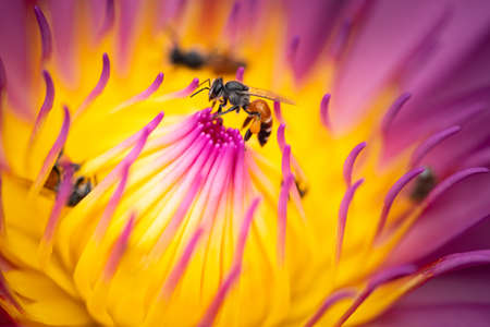 Nature of flower and bee in garden using as background natural wallpaper
