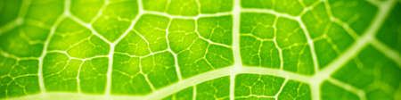 Nature of green leaf in garden using as background natural cover page Imagens