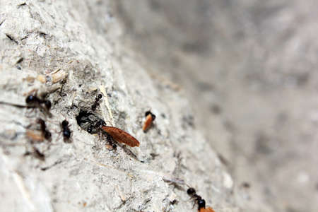 ants carries a crumb of bread, Stock Photo